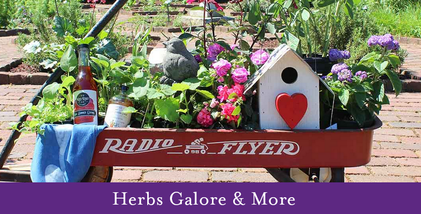 Herbs Galore and more