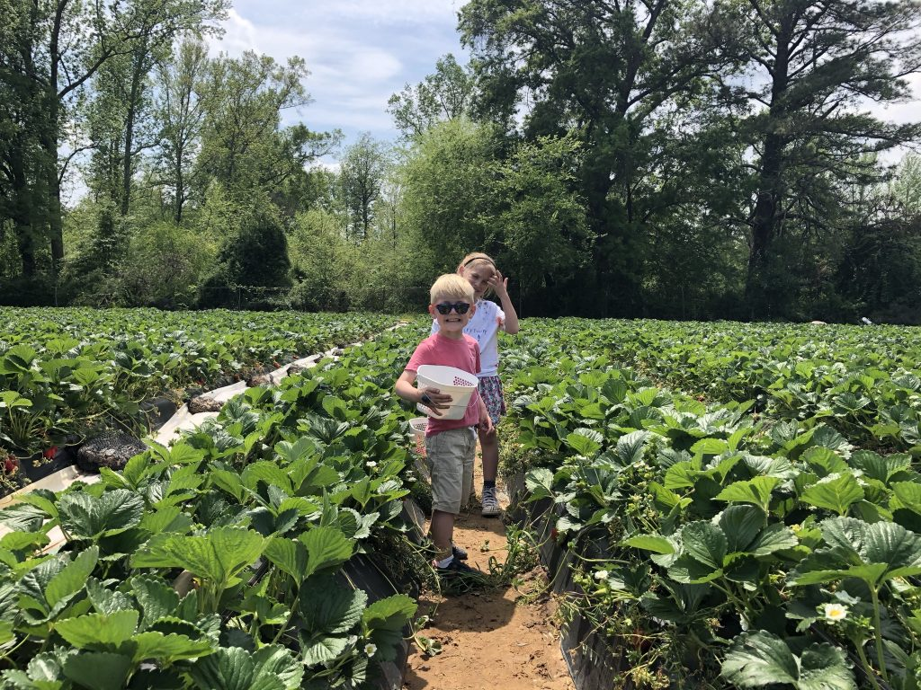 chesterfield berry farm
