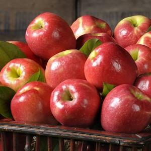 pinklady-apples-470-300x300
